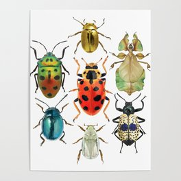 Beetle Compilation Poster