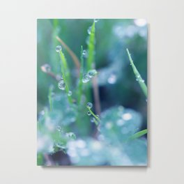 Dewy Morning Metal Print