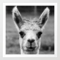 alpaca Art Prints featuring Alpaca by Amie Amyotte