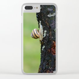 The Banded Garden Snail Clear iPhone Case