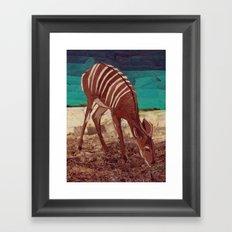 Nyala Framed Art Print