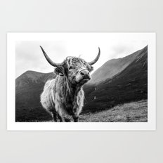 Highland Coo Art Print