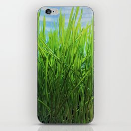 Wheat Grass in Motion iPhone Skin