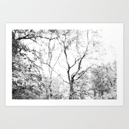 Black and white tree photography - Watercolor series #1 Art Print