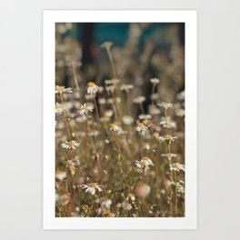 Field of Daisies - Floral Photography #Society6 Art Print