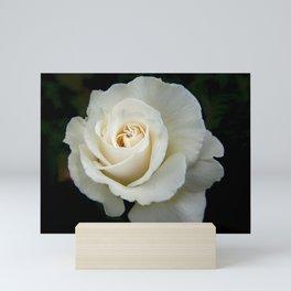 Rose Bloom Mini Art Print