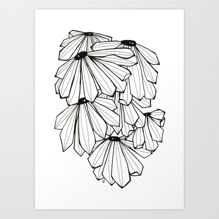 Coneflower Kunstdrucke