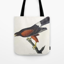 Louisiana Hawk from Birds of America (1827) by John James Audubon (1785 - 1851) etched by Robert Hav Tote Bag