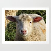 lamb Art Prints featuring lamb by OllieThatsMe