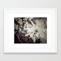 magnolia Framed Art Prints featuring magnolia by Bonnie Jakobsen-Martin