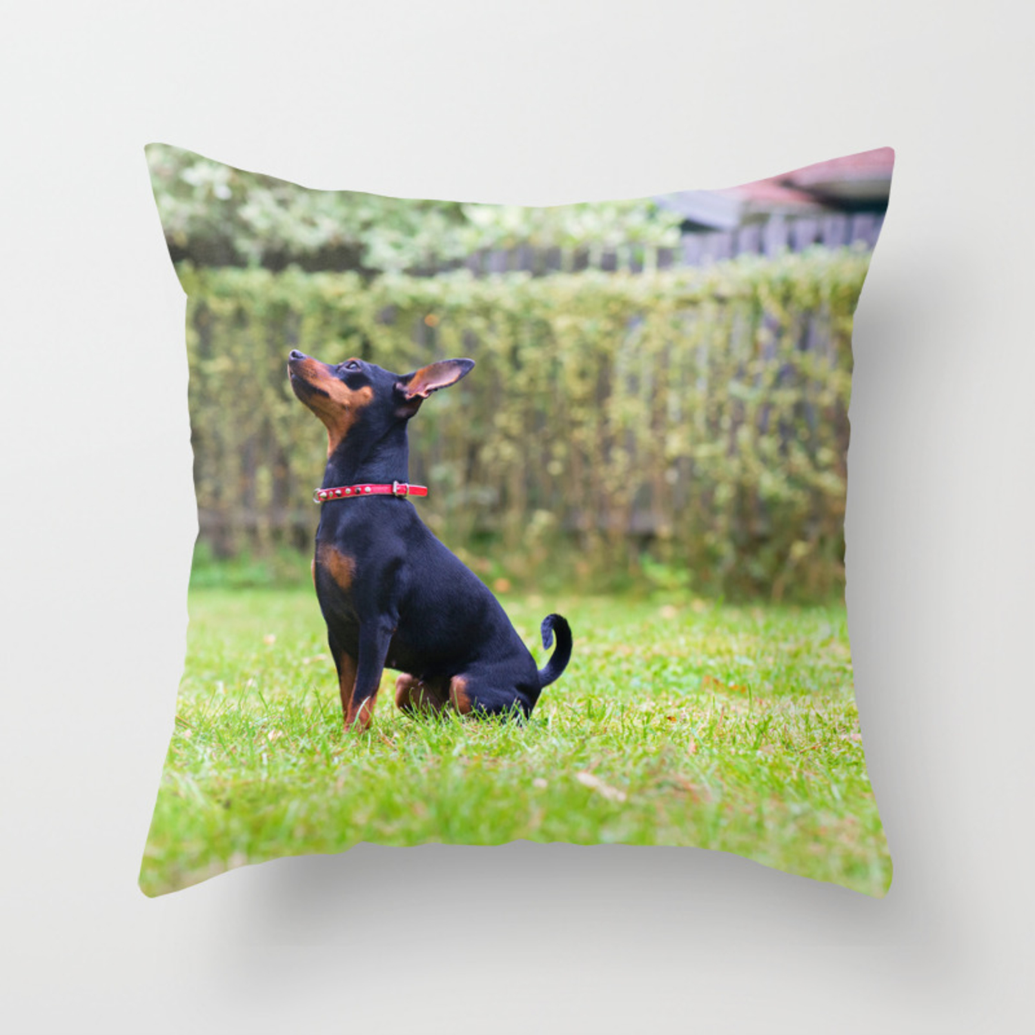 Outdoor Portrait Of A Red Miniature Pinscher Dog Sitting On The Grass Throw Pillow By Anytka Society6