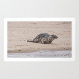 Cape Cod baby seal Art Print