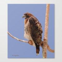 hawk Canvas Prints featuring Hawk by DiDi Higginbotham