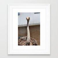 ostrich Framed Art Prints featuring Ostrich :) by IowaShots