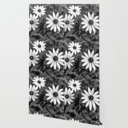 Three Gloriosa daisies B&W Wallpaper