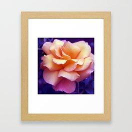 bed of roses: purple rose of cairo  Framed Art Print