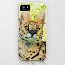 SERVAL BEAUTY iPhone Case