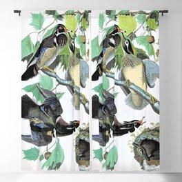 12,000pixel-500dpi - Summer Or Wood Duck - John James Audubon Blackout Curtain