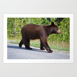 The happiest bear in Jasper National Park Art Print