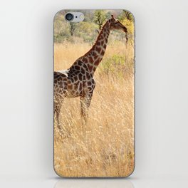 African Giraffe on a Bright Day iPhone Skin