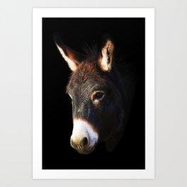 Donkey Black Background Art Print