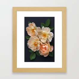 English Rose Collection Framed Art Print