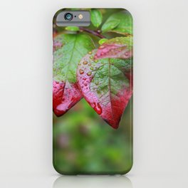 Water Droplets on 2 Red Tipped Leaves iPhone Case
