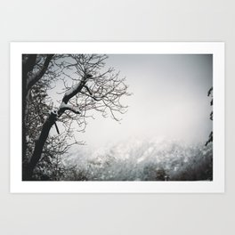 Snowy Branches II Art Print