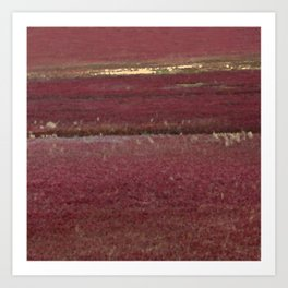 Cape Cod Cranberry Bog Art Print