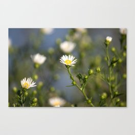 Mini Daisy Canvas Print