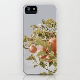 Orange Citrus Fruit Tree Blue Sky iPhone Case