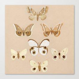 pale moths Canvas Print