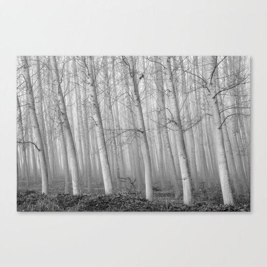 Foggy Poplars. BW Canvas Print