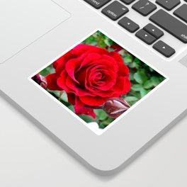 Rose revolution Sticker