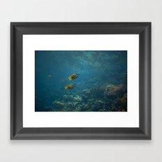Foxface rabbitfish Framed Art Print