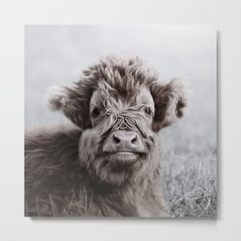 HIGHLAND CATTLE CALF ALF Metal Print