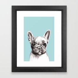 French bulldog in turquoise Framed Art Print
