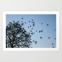 Coming Into Roost #1 Art Print