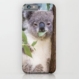 Australian Koala eating gum leaves iPhone Case