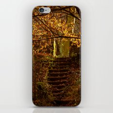 Stepped into the Autumn Light iPhone & iPod Skin