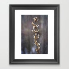 Still life- dried winter plant Framed Art Print