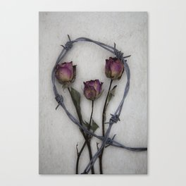 Three dried Roses II Canvas Print