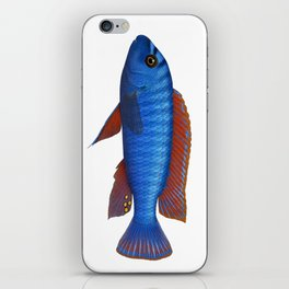 Malawi cichlids Labeotropheus trewavasae male iPhone Skin