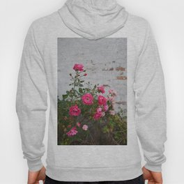 pink roses and old wall Hoody