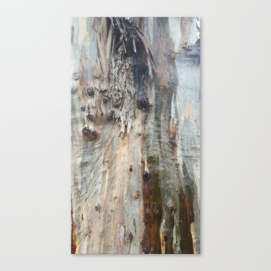 Colors of a Eucalyptus Canvas Print