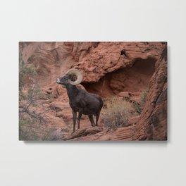 Desert Bighorn, Valley of Fire - III Metal Print