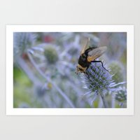 Black Bee Fly Art Print