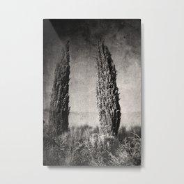 Umbrian Cypress Metal Print