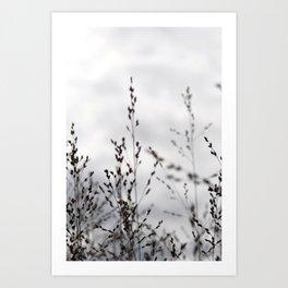 Grey Grasses Art Print