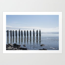 Birds sitting on breakwater in a calm sea, the Netherlands, travel photo print Art Print